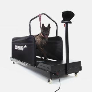 Dog runner L